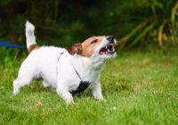 Bērnu sakodis suns: kas jādara pirmkārt un kā palīdzēt