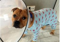 Suņa saimniece sasmīdināja: kāds zvans veterinārārstam
