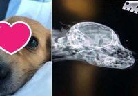 Suns vienradzis: mazs kucēns piedzima ar asti uz pieres. Divkārši jauks!