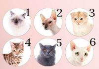 Vācu psihologu tests: izvēlies kaķi un noskaidro savas patiesās spējas!